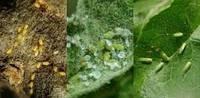 Средства от вредителей- инсектициды