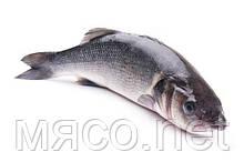 Рыба Сибас 300/400