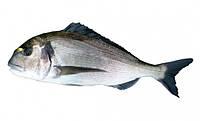 Рыба Дорадо 300/400 заказ от 2 ящ.