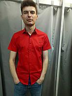 Красная рубашка с синей отделкой Noseda короткий рукав
