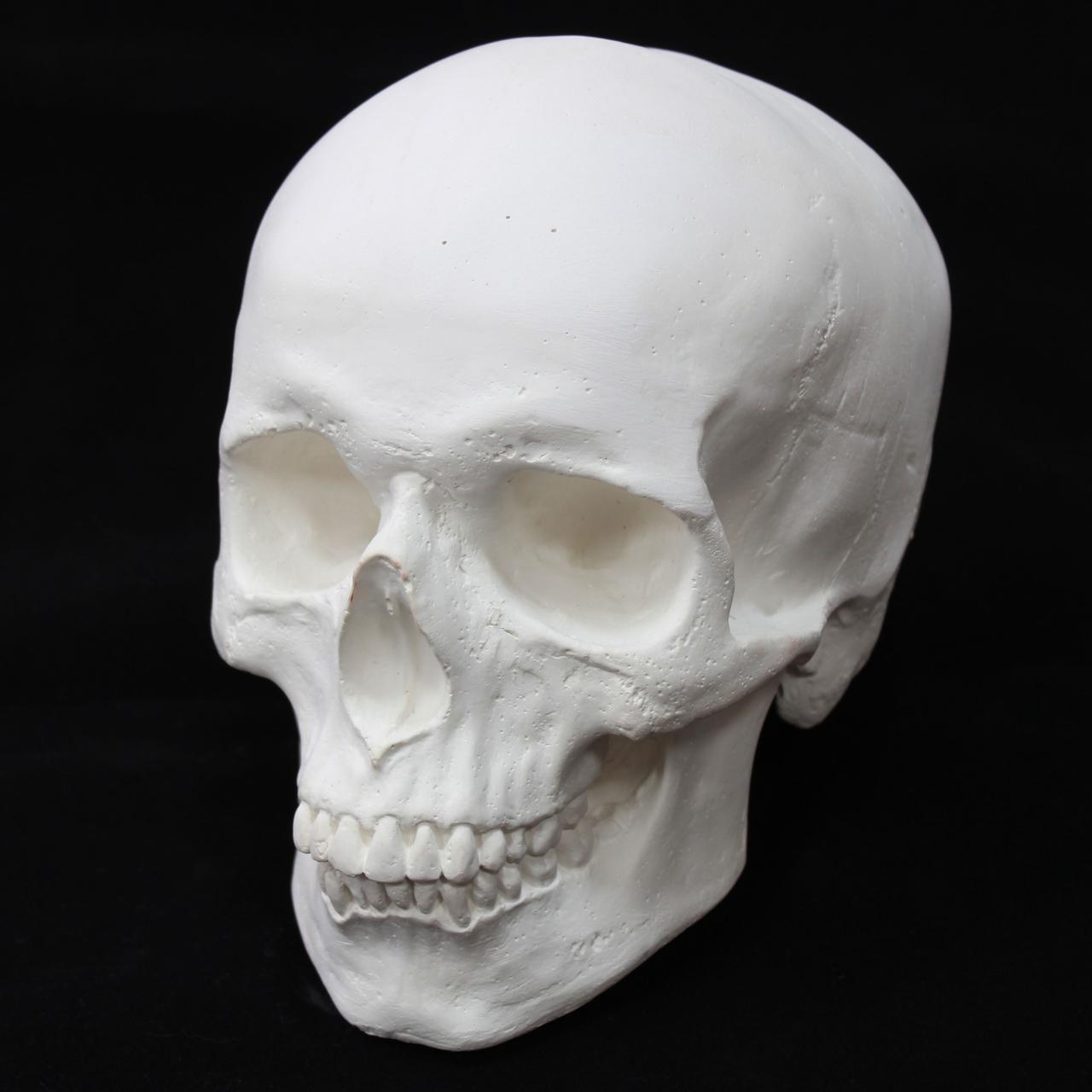 Череп гипсовый, декоративный, белого цвета, в натуральную величину, фото 1