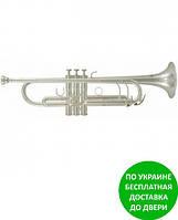 Труба Roy Benson Bb- труба TR-402S RB701083
