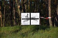 """Мишень Сателит 16-ти дольная """"Заяц"""" А1(А3) 96 листов  ч/б (124), фото 1"""