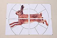 """Мишень Сателит 16-ти дольная """"Заяц"""" А1(А3) 96 листов  цвет (126), фото 1"""