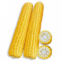РАННЕЕ НАСЛАЖДЕНИЕ F1 / RANNEE NASLAZHDENIE F1 — Кукуруза, Lark Seeds, 2 500 семян