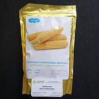 Семена кукурузы МЕГАТОН F1 4000 семян Harris Moran