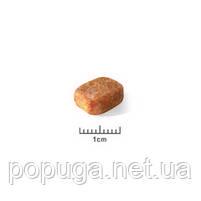 Royal Canin Chihuahua Junior корм для чихуахуа, 0,5 кг, фото 2