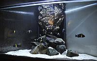 Обслуживание аквариумов Киев и Киевская область
