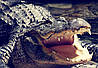 """MEIZU PRO 5 оригинальный кожаный чехол книжка из натуральной кожи магнитный противоударный """"CROCO HEAD"""", фото 3"""