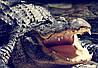 """MEIZU PRO 7 оригинальный кожаный чехол книжка из натуральной кожи магнитный противоударный """"CROCO HEAD"""", фото 3"""