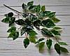 Лист фикуса зеленый глянец