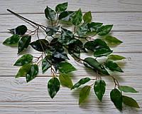 Лист фикуса зеленый глянец, фото 1