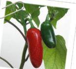 Паприка чили Jalapeno  гранулами 1-3 мм зеленый 1 кг/ упаковка