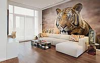 """Фотообои на флизелиновой основе """"Тигр крупным планом"""""""