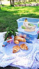 Відкриваємо сезон шашликів! Найкращі поради як підготуватись до пікніку.