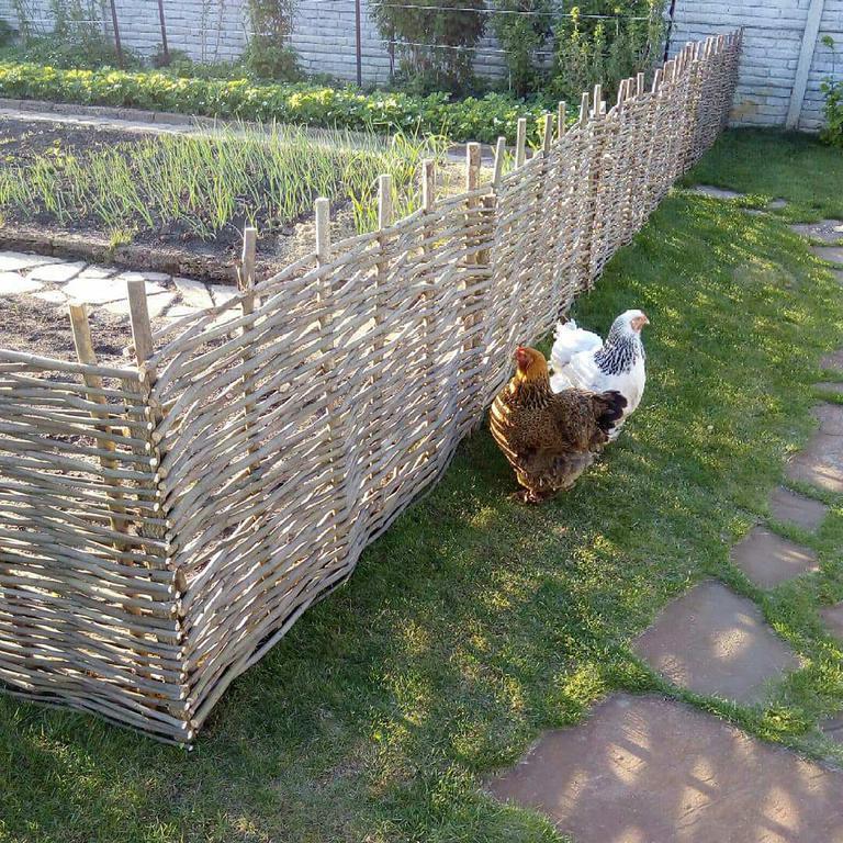 Ограждение грядок от домашней птицы
