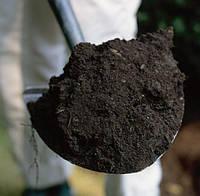 Чернозем насыпью, фото 1