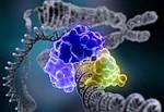 Протеолитические ферменты  - что это такое и для чего нужны?