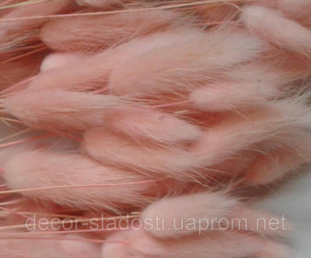 Сухоцвіт лагурус ніжний персик(10 штук в пучку)