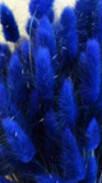 Сухоцвет Лагурус -зайцехвост)синий