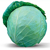 Семена капусты б/к Хонка F1 1000 семян Kitano