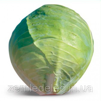 Семена капусты б/к Хитоми F1 1000 семян Kitano