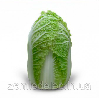 Семена капусты пекинской Зена F1 1000 семян Kitano