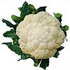 Семена цветной капусты Ванза F1 (KS 35) 1000 семян Kitano