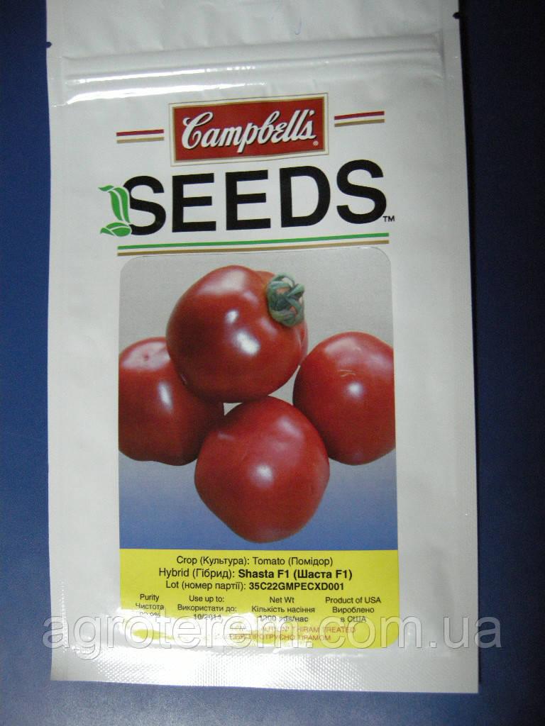 Семена томата  Шаста F1 (Shasta F1) 1000с