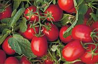 АСТЕРИКС F1 / ASTERIKS F1 - томат детерминантный, Syngenta 2500 семян