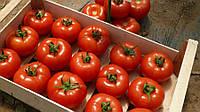 КЛАД F1 / KLAD F1 — томат индетерминантный, Lark Seeds 1000 семян