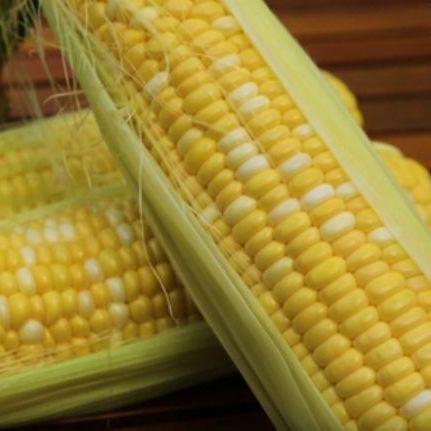 Семена кукурузы сладкой Ракель F1 (5000 сем.)