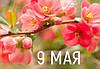 9 мая - выходной день