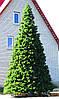 Высотная елка каркасная уличная 12.5 метров (леска ПВХ)