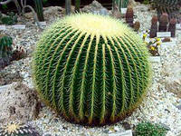 Декоративный искусственный кактус 70 см