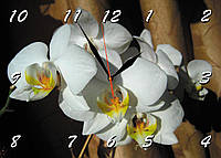 Часы настенные стеклянные Т-Ок 002 SG-25035030