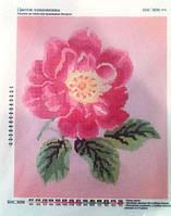 """Ткань с нанесенным рисунком-схемой (атлас) """"Цветок шиповника"""", 31*26см.,  для вышивания бисером,"""