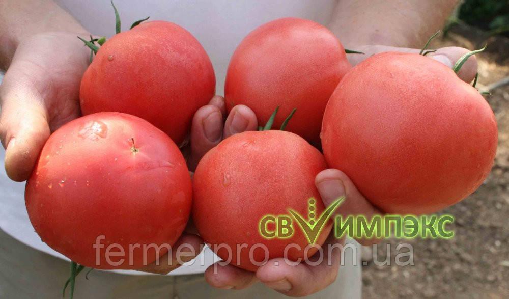 Семена томата TETM 010 F1 Takii Seeds 500 семян