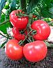 Семена томата KS 14 F1 1000 семян Kitano