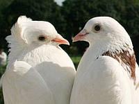 Номер с  голубями (пара), мыльные пузыри (2 номера)