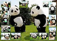 Панда-шоу, фото 1