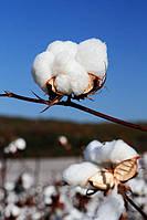Органический хлопок Bio Cotton