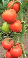 Семена томата Белфаст F1 500 сем. Enza Zaden