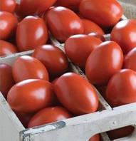 Семена томата Гранадеро F1 500 сем. Enza Zaden Organic