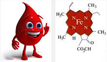 Підвищення гемоглобіну в крові за допомогою БАД НСП.