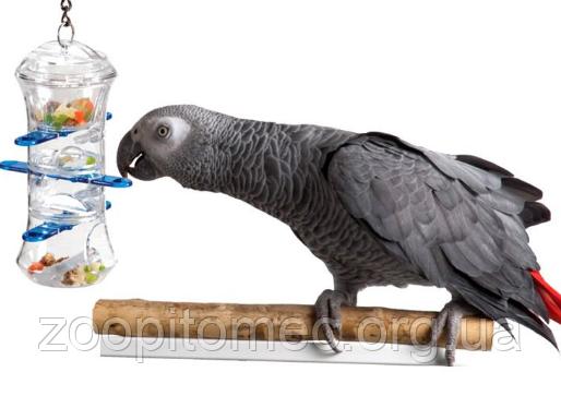 Товары для птиц интернет-магазин