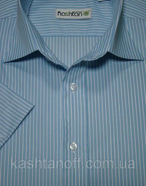 Рубашка мужская в голубую полоску 100% хлопок