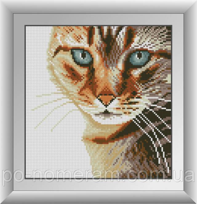 алмазная живопись взгляд кошки
