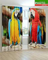Фотошторы попугаи