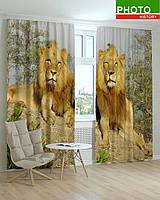 Фотошторы животные львы